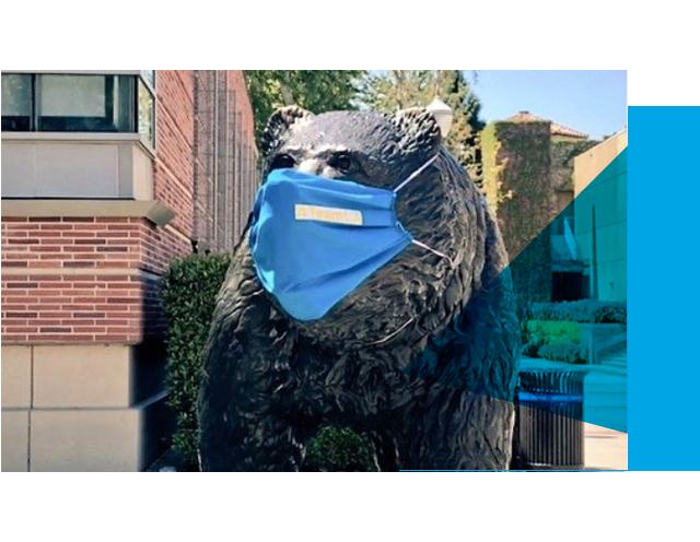 Bruin Bear Wearing Mask