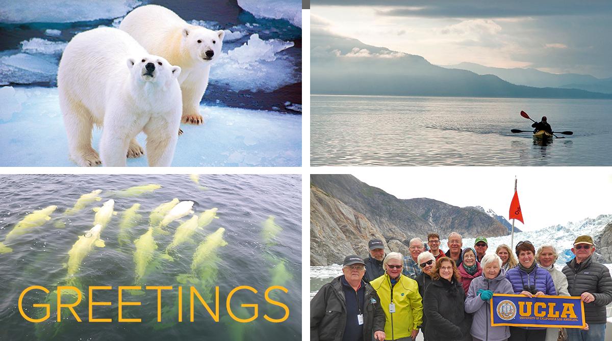 Polar bears, Kayaking in Alaska, Beluga whales and a group of travelers in Alaska