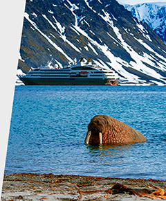 A walrus in the Arctic