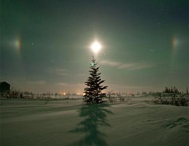 A tree underneath the Arctic sun