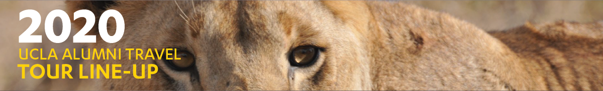 The eyes of a lioness